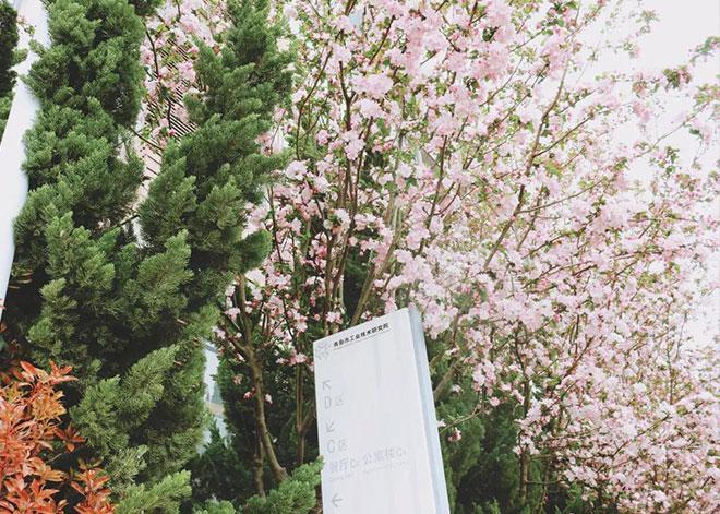 四季景色春